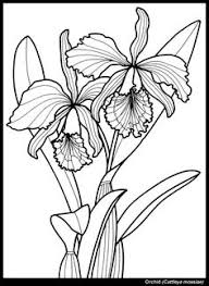 Image Result For Coloring Flowers Butterflies Dragonflies