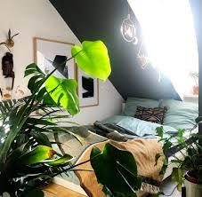 monstera und maranta pflanzen sind der neue interior trend