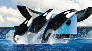 SeaWorld To Stop Killer Whale Shows - YouTube Suspected Serial Killer Arrested In Mcdonalds Over Florida Murders Truckersfinalmileorg Families Served Green Screen The Lack Of Female Road Narratives And Why It Matters Ohio Truck Driver Accused Being Truckstopkiller Hashtag On Twitter Craigslist Killers Gq Highway Killer Adam Leroy Lane Truck Stop Kids Room Decor Ideas Aileen Wuornos Timeline How She Became Damsel Of Death I65 An Indiana Kentucky Still Runs Loose Bus Milly Dowler Her Murder The Full Story