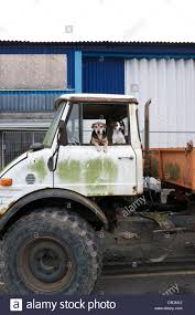 100 Unimog Truck Old Mercedes Benz Truck And Dogs Stock Photo 40253726 Alamy