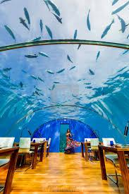 100 Conrad Maldive Views From Ithaa The Undersea Restaurant At