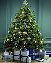 Christmas Tree Has Aphids by Can You Tell Which Christmas Trees Are Luxury Daily Mail Online