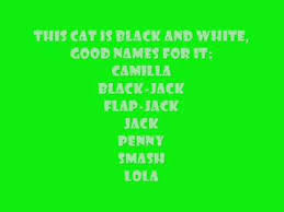 cat names cat names