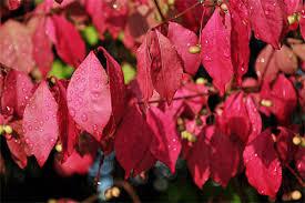 invasive plants gardener s supply