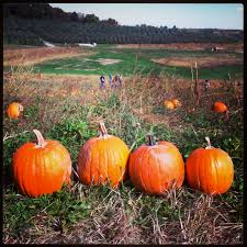 Pumpkin Patch Indiana County Pa by 2014 Fall Activities In Pittsburgh Family Guide The Pittsburgh