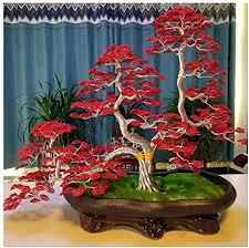 de sxgky künstliche cedar bonsai bäume glücklicher