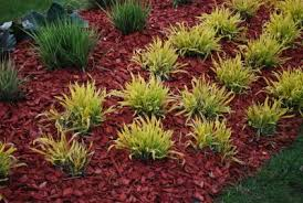 Is Colored Mulch Toxic – Safety Dyed Mulch In The Garden
