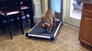 Chew Proof Dog Beds by Kuranda Dog Beds Orthopedic And Chew Proof Dog Beds