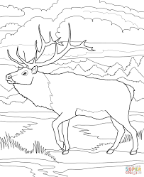 Click The Woodland Caribou Coloring Pages To View Printable Version Or Color It Online Compatible With IPad And Android Tablets