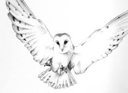 ORIGINAL Charcoal Flying Barn Owl Drawing Owl art Barn Owl