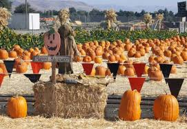 Pumpkin Picking Corn Maze Long Island Ny by Best Nyc Pumpkin Patches