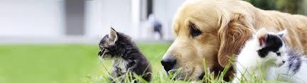benson animal hospital veterinarians benson carolina creek veterinary