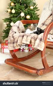 Cute Cat On Rocking Chair Front Stock Photo (Edit Now) 221556718