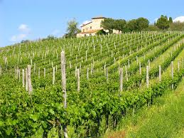 Tuscany Culinary Tour