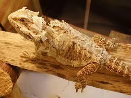 uv transmission through reptile skin shed