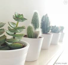 plante de bureau bonnes raisons de vous offrir une plante verte pour votre bureau