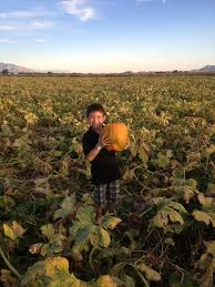 Pumpkin Patch Farms In Phoenix Az by Arizona Families Marana Pumpkin Patch Full Of Family Fun