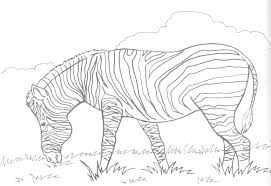 Zebra Coloring Pages Free Printable For Kids Kid