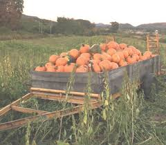 Where Did Pumpkin Patch Originate by Walters State Foundation Teams With Myers Pumpkin Patch For