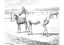Printable Arabian Horse Coloring Pages Free Page With Realistic Horses