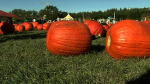 Best Atlanta Area Pumpkin Patch by Pumpkin Patch Pumpkin Picking Pumpkin Farm In Long Island Youtube