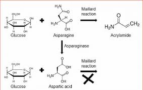 Reduction Of Acrylamide Formation By Microbial Asparaginase During Food Processing Modified From 26