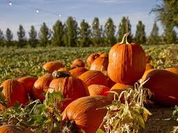 Pumpkin Patches In Bakersfield Ca by Fall In Love With Autumn