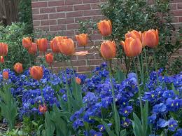 ideas for your fall bulb planting