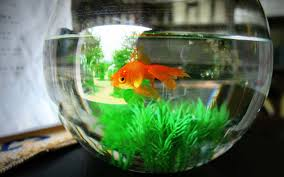 Star Wars Fish Tank Decorations by This Hotel Lets Lonely Guests Rent A Goldfish To Keep Them Company