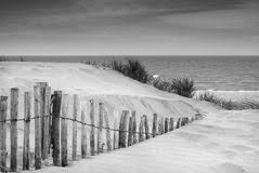 Grassy Sand Dunes Landscape At Sunrise In Black And White Stock Images