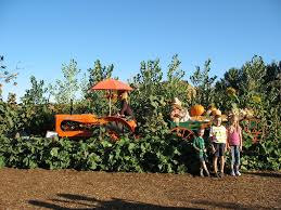 Pumpkin Patch Yucaipa Hours by Occasionalpiece October 2006