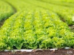 chambre agriculture aix en provence chambre d agriculture des bouches du rhône aix en provence