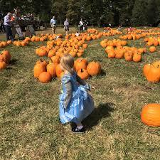 Pumpkin Picking Ct Best by 100 Pumpkin Picking Ct Autumn Apple Picking In Stratford