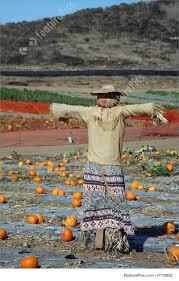 Bengtson Pumpkin Farm Lockport by 100 Bengtsons Pumpkin Patch Hours Nebraska Realty