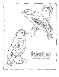 Free Animal Coloring PagesEchos Sheets