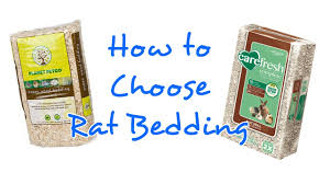 how to choose bedding for rats rattiepedia episode 9 youtube