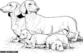 Coloring Dachshund Amazing Pages