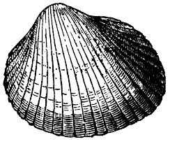 Viewing Gallery For Clip Art Seashells