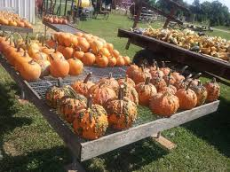 Pumpkin Patch North Bend Oregon by The 10 Best Pumpkin Patches In Indiana To Visit In 2016