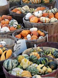 Northeast Iowa Pumpkin Patches by Good Gourds Even With Drought There Are Pumpkins A Plenty In