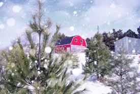 Tannenbaum Christmas Tree Farm Michigan by 11 Places To Get Fresh Live Christmas Trees In Nebraska