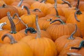 Pumpkin Farms In Belleville Illinois by 11 Pumpkin Patches And Corn Mazes To Visit Near St Louis