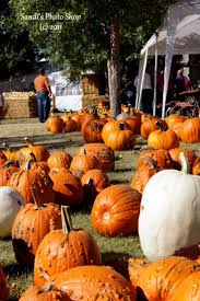 Fargo Moorhead Pumpkin Patches by 35 Best Williston Nd Images On Pinterest 1950s Advertising And