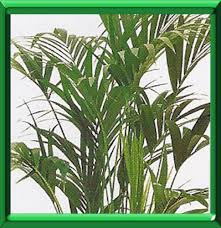 plantes vertes d interieur plantes vertes d interieur conseils pour l hiver