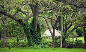 McBryde Garden