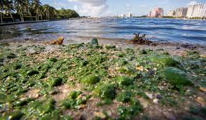 Bathtub Beach Stuart Fl Beach Cam by Update Riviera U0027s City Beach Peanut Island Closed To Swimming