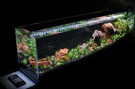 what is the best light for aquarium plants aquarist guide
