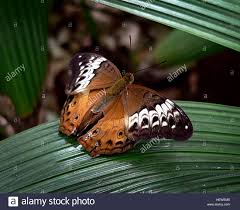 100 Butterfly House Melbourne Ication Butterflies House Zoobutterfly On