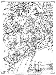Adult Coloring Bird Free Printables Adults Pages Pictures
