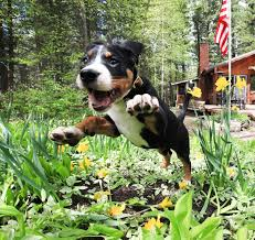 Dogs That Dont Shed And Smell by Dog Repellents How To Keep Dogs Away From Yards